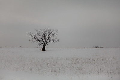 Beaver Creek, Saskatchewan Snow 2010