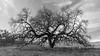 Bruces Oak Valley--3