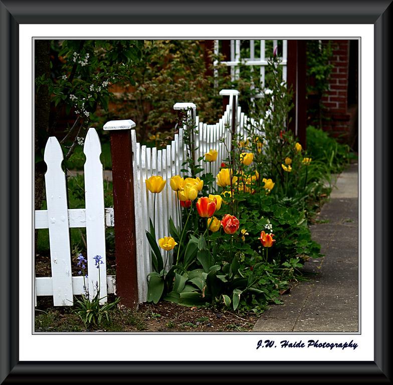Tulip Fence