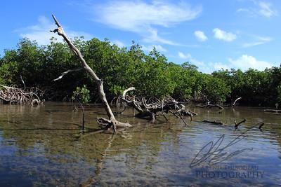 Jones Lagoon