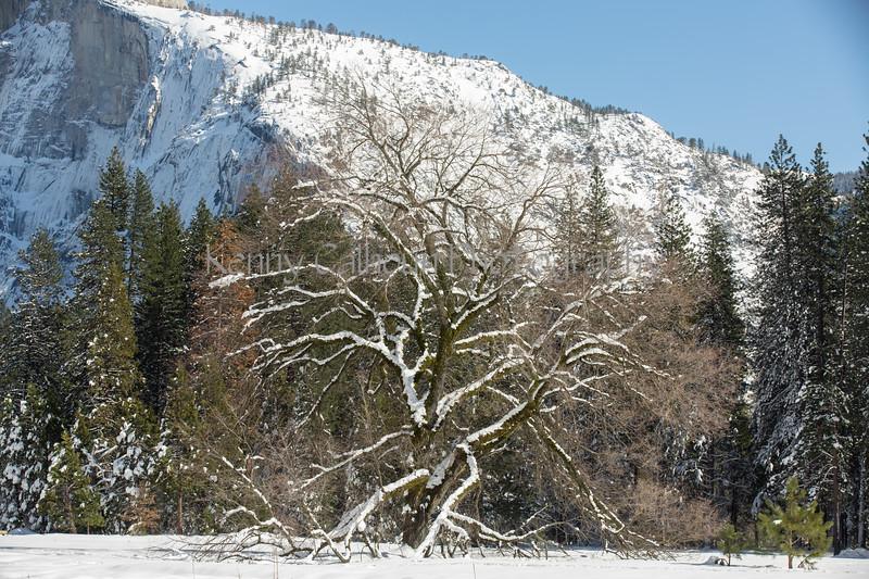 Yosemite Fire Falls-0402