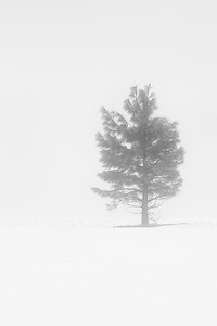 Yosemite in a Snow Storm
