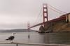 Golden Gate Bridge, San Francisco on a foggy September morning.