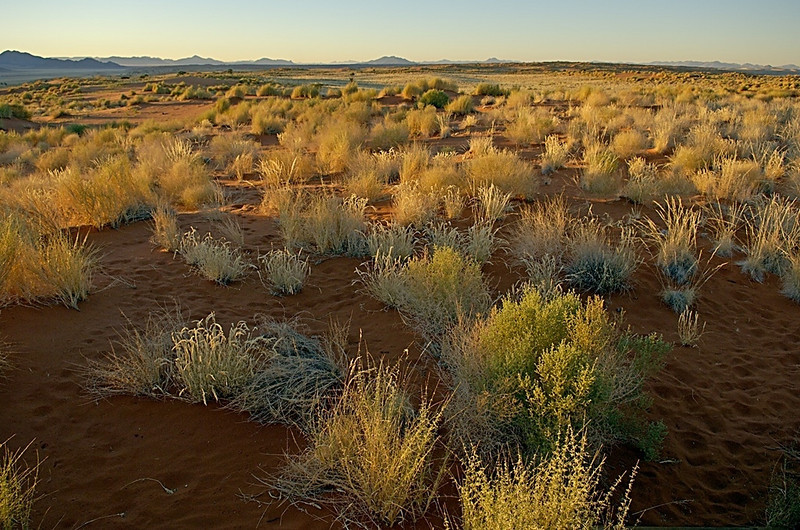 Grasses, NamibRand Nature Reserve, Namibia