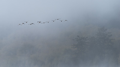 Into the Mist at Esquimalt Lagoon