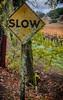 Napa_and_Sonoma_RainNovember_16,_20121N5A6573untitled_HDR