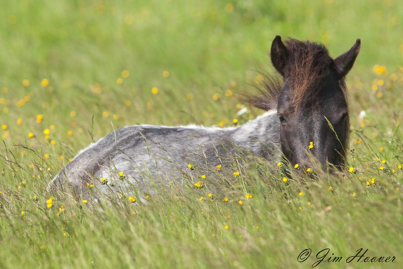 Wild pony<br /> Grayson Highlands State Park