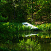A boat by the edge of the pond.  The yellow water iris ring the pond and bloom in early May.