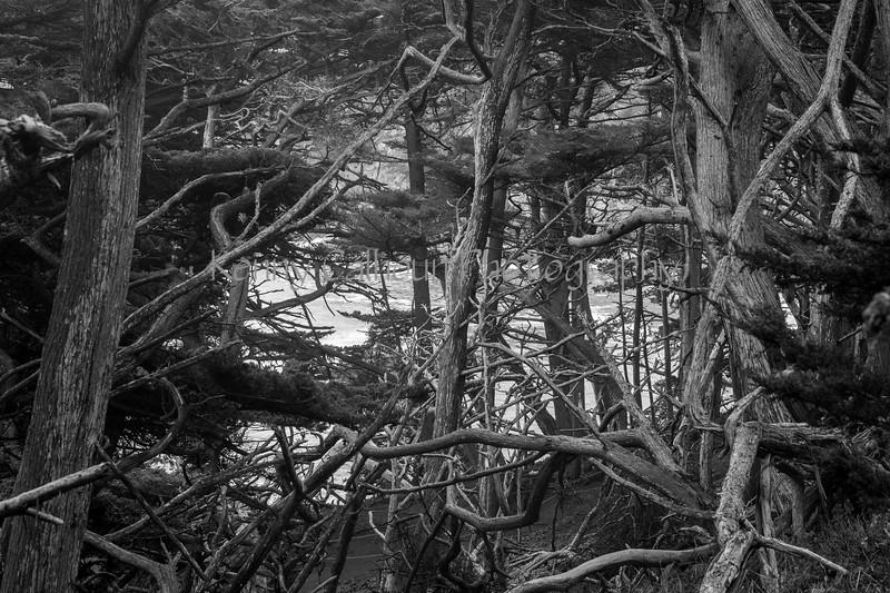 Point Lobos _N5A8134