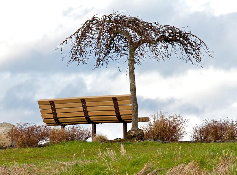 IMAGE: http://photos.deepaksingh.net/Landscapes/Landscapes/i-zmm38FB/0/L/Tree-and-bench-L.jpg