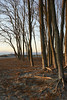 Sometimes the best part of the sunset is behind you. Loved the light it cast on the bare trees and sandy floor.