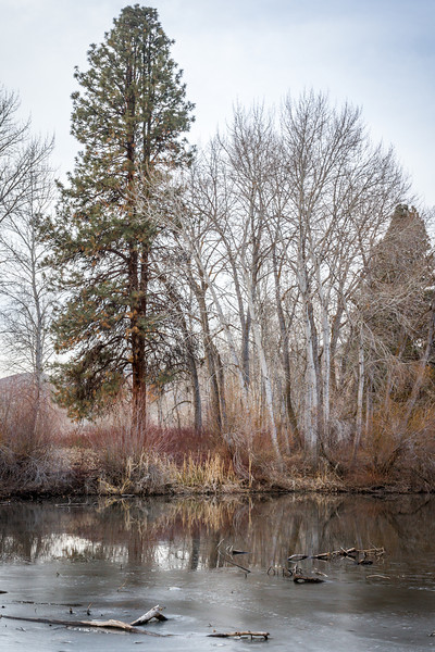 Frozen backwater pond on the Yakima River, Washington.