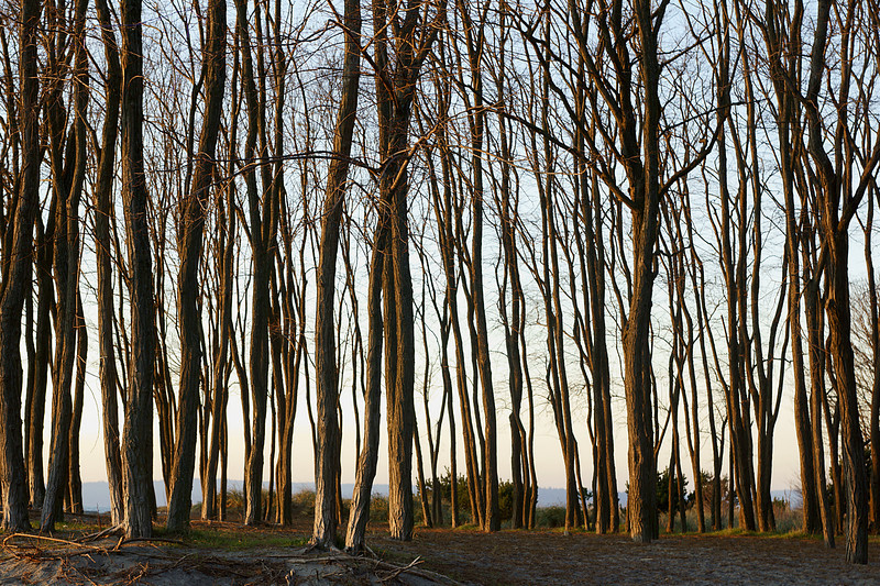 Sometimes the best part of the sunset is behind you. I liked the late evening sun on these trees along the beach.