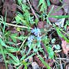 """Creeping Charlies """"attacking"""" my landscaping area behind my house (May 12th 2016)..<br /> <br /> <a href=""""http://www.gardeningknowhow.com/plant-problems/weeds/kill-creeping-charlie.htm"""">http://www.gardeningknowhow.com/plant-problems/weeds/kill-creeping-charlie.htm</a><br /> In order to kill creeping charlie, you must apply dicamba based herbicide to your lawn in early fall when creeping charlie plant is growing most actively, which will leave it weakened enough so that it will have a difficult time surviving the winter. You can also apply in the late spring to early summer, but late spring to early summer applications will stall rather than eradicate creeping charlie in your lawn....""""<br /> <br /> <a href=""""https://autohomeandgarden.wordpress.com/2016/05/14/home-yard-weed-or-not-to-weed-with-chemicals/"""">https://autohomeandgarden.wordpress.com/2016/05/14/home-yard-weed-or-not-to-weed-with-chemicals/</a><br /> <br /> <br /> <br /> ADVERTISEMENT<br /> If You Find This Weed Growing In Your Garden, You Should Probably Just Leave It Well Alone<br /> <br /> <a href=""""http://scribol.com/y/lifestyle/health-and-body/if-find-weed-growing-in-garden-should-probably-just-leave-well-alone/?utm_source=Yahoo&utm_medium=Search&utm_campaign=Plant_You_Should_Not_Kill_US_DESKTOP_1_EXPERIMENT_CAROUSEL_ADS_BASE&utm_content=HOMEPAGE_US&utm_term=YGAM_116572"""">http://scribol.com/y/lifestyle/health-and-body/if-find-weed-growing-in-garden-should-probably-just-leave-well-alone/?utm_source=Yahoo&utm_medium=Search&utm_campaign=Plant_You_Should_Not_Kill_US_DESKTOP_1_EXPERIMENT_CAROUSEL_ADS_BASE&utm_content=HOMEPAGE_US&utm_term=YGAM_116572</a><br /> he plant in question is purslane, although scientists refer to it as Portulaca oleracea. It is also known by a wide variety of other names, such as fatweed, duckweed, pigweed, pourpier, little hogweed and verdolaga."""