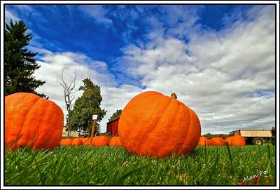 Pumpkin Autumn, upstate NY 2010