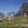 Gammel støl med kyr og beitemark, Sogn og fjordane