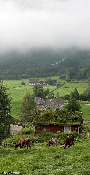 Fra Haukedalen, Førde