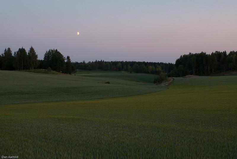 Senkveldsteming ved kornåker, Eldor, Ås
