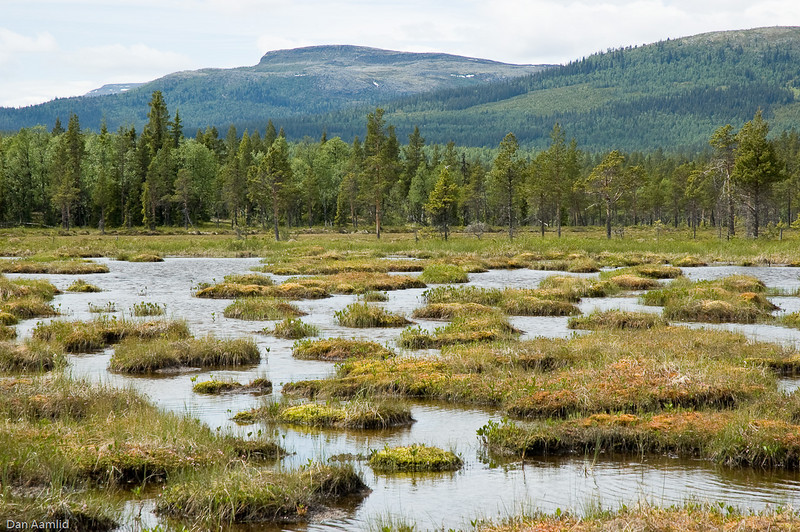 Myr og fjellskog, Hirkjølen