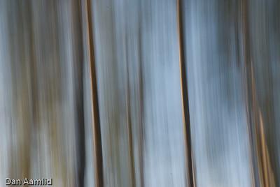 Abstrakt7 furuskog