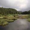 Trolldalen Skog og myr, Birkenes