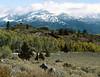 Monitor Pass, Sierra Nevada Mountains, California