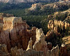 Hoodoos and forest at sunset, Bryce Canyon National Park.