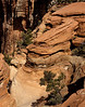 Sandstone formation, Zion National Park