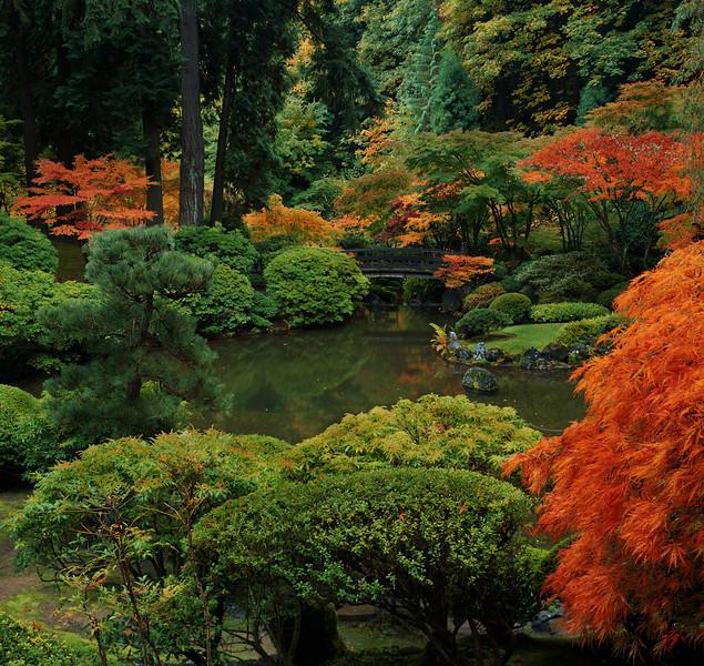 Japanese Garden Fall.  Schneider 100mm XL lens, Fuji Velvia 100