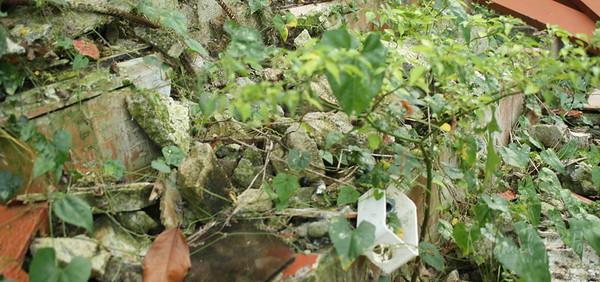 Vegetation taking over