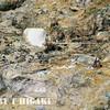 lassen volcanic park-4