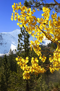 Lassen Park in Fall with Pam