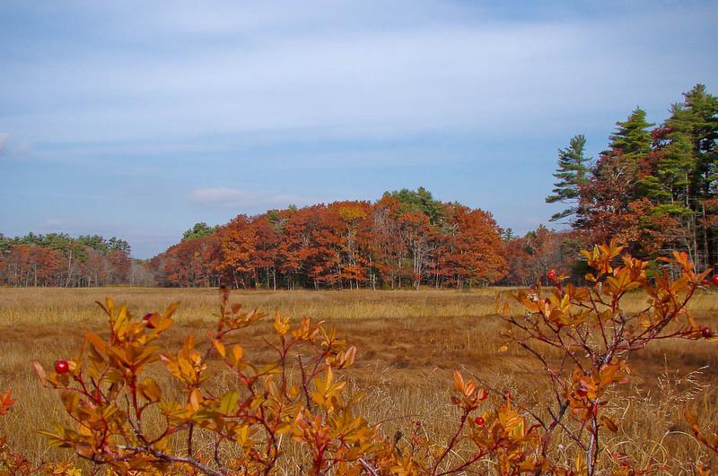 Little River Marsh in Copper Color