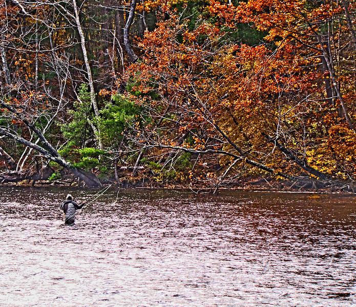Oaks and Angler