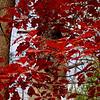 Bright Oak