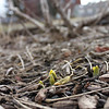 Late winter sproutings, and some macro work with my camera