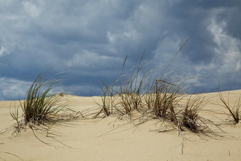 Jockey Ridge Dune