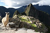 "The legendary Machu Picchu, the lost city of the Incas.  When deciding to visit Machu Picchu I had the highest expectations possible for the infamous Inca ruins. . . and it exceeded every last one.  The ruins were magical, well preserved, and despite the thousands of tourists, the experience felt incredibly intimate.  I hiked five days on the Salkantay Trek to Machu Picchu, arriving the final day at the ruins at 4:30am at the ruins.  I watched the mist raise from the lost city of the Incas as the sun rose over the empty city.  I spent all day wondering the labrynth of rock walls and gardens, photographing and napping in hidden corners where I didn't seen another tourist for hours.  I stayed until the final tourist bus left the park and for the hour and a half before sunset I had the entire city to myself.  Eventually a security guard came by and told me that the park had been closed for nearly two hours and asked me to leave.  The dark 5 mile walk down the mountain to Aguas Calientes was more than worth the two hours I had the lost Inca City to myself at sunset.  There are many more photos of Machu Picchu under ""my Raw Photo Collection"" in the gallery titled ""Peru."""