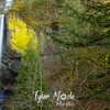 6  G Latourell Falls Left