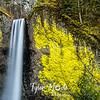 11  G Latourell Falls Close