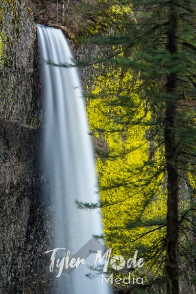 41  G Latourell Falls Trees Close S V