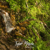 50  G Falls on Trail