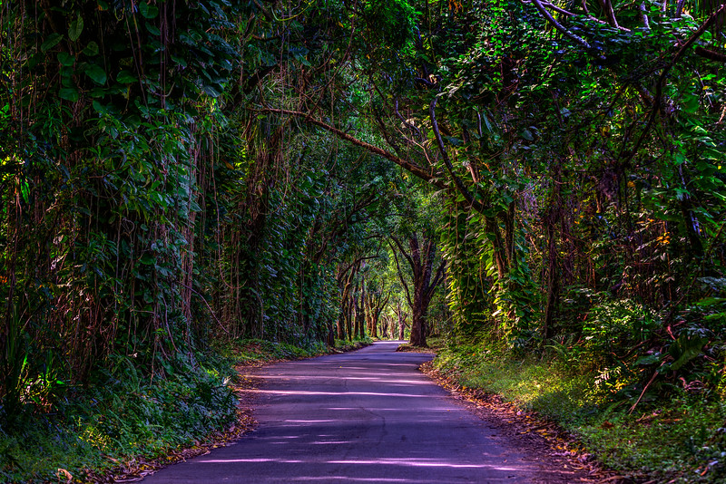 Tree-Tunnel-Big-Island-Hawaii_D811932-Fine-Art-Photography-Long-Road-green