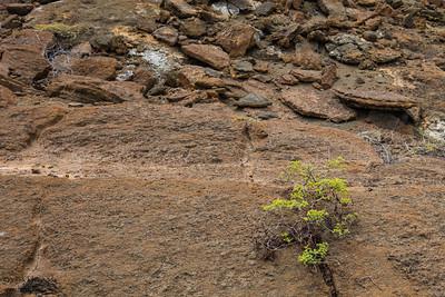 Life is resilient - Galapagos, Ecuador