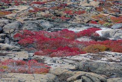 Life blooming in lava beds - Galapagos, Ecuador