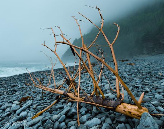 Driftwood at Cap Bon-Ami