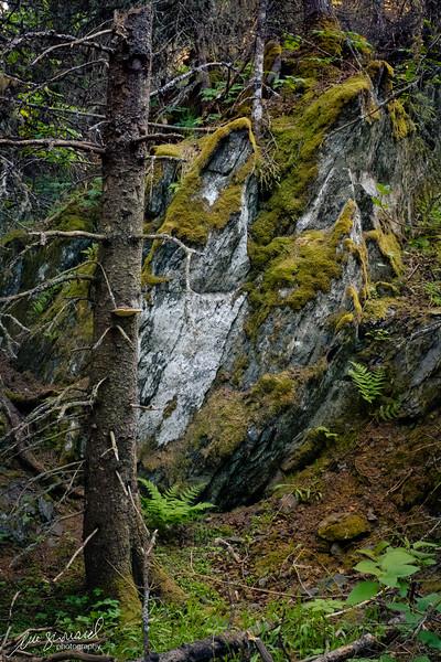Moss covered boulder