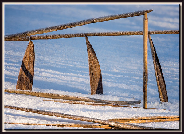 Schilfgras im gefrorenen See