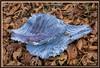 Blätter vom Blaukraut