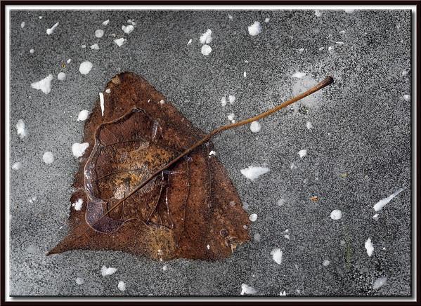 Blatt im Eis